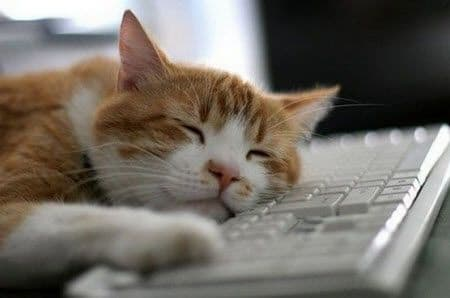 cat sleeping on the keybord